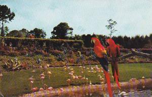 Florida Orlando Mac And Marshall 1985