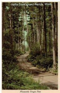 Postcard - Scenic Trail Through Virgin Pine, Grand Rapids, Minnesota