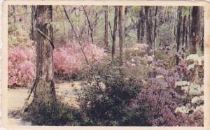 South Carolina Oakley Cypress Gardens
