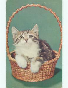 1950's ADORABLE KITTEN CAT LOOKS UP FROM WICKER BASKET k8601