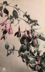 ?Vintage Postcard 1907 Pink Flowers Plant Leaves Bloom Painting Artwork