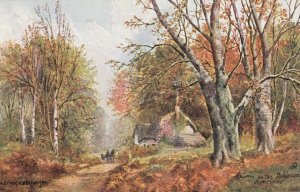 Autumn in the Bolderwood , HAMPSHIRE , 00-10s ; TUCK 7113