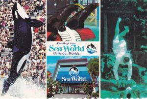 Killer Whale , Seaworld ,Orlando , Florida , 1980