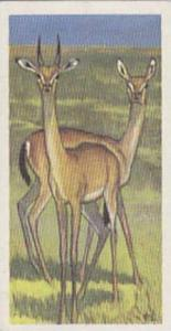 Brooke Bond Tea Vintage Trade Card Wildlife In Danger No 23 Dibitag Or Clarke...