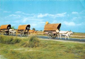 Bull Carts - Philippines