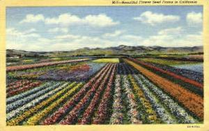 Flower Seed Farms