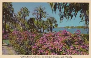 Azalea Lined Sidewalks In Colorful Winter Park Florida 1969
