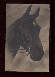 018193 Head of HORSE. Best Friend. Vintage Photo PC