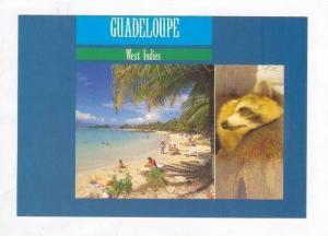 2views, Gudeloupe, 80s