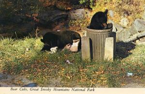 Black Bear Cubs in the Smoky Mountains