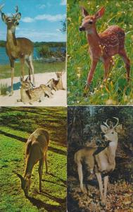 (4 cards) White Tail Deer - Bucks - Fawns - Animals