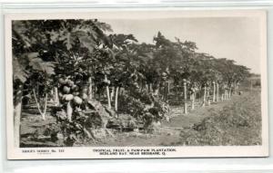 australia, BRISBANE, Paw-Paw Fruit Plantation (1950s) RPPC