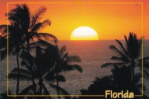 Palm Trees Against A Tropical Florida Sunset