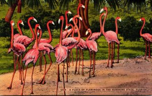Florida Flock Of Flamingos In The Sunshine State