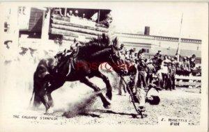 RPPC - THE CALGARY STAMPEDE J. Rosettis photo # 301 thrown by buckin' bronc