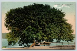 Le Claire Iowa~The Green Tree Historic Elm~Kids on Wood Rail Fence~Bridge~1907