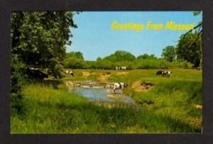 MO Greeetings from MISSOURI Postcard PC Cows Grazing