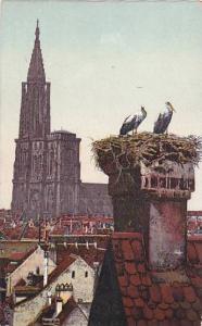 Strassburger Storchennest, Strassburg (Bas Rhin), Germany, 1900-1910s