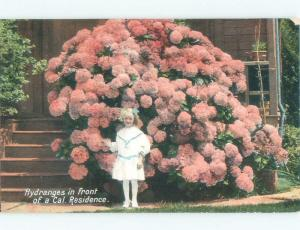 D-back GIRL STANDING BY HYDRANGEA FLOWERS Postmarked San Francisco CA E9722