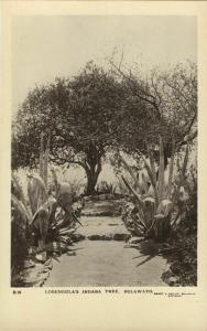southern rhodesia, BULAWAYO, Lobengula's Indaba Tree (1920s) RPPC