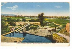 Jericho , Palestine, 00-10s   Elisa's Fountain