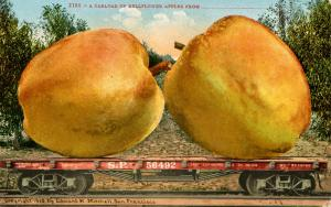 Exaggeration - A Carload of Belleflower Apples from______