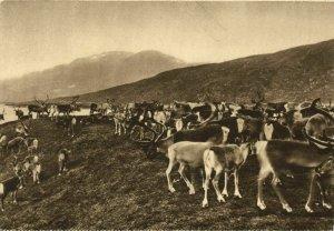 norway norge, Norwegian Medicinal Cod Liver Oil Postcard, Reindeer (1930s)