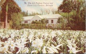 Lili Perfume Factory & Easter Lily Gardens Bermuda Unused Gorham Postcard F52