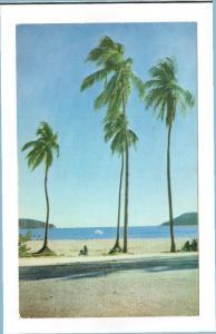 ACAPULCO, Mexico; Los Hornos, Palm Trees, 40-60s