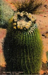 Arizona Barrel Cactus On The Desert 1954