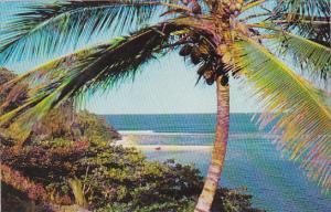 Jamaica San San Bay