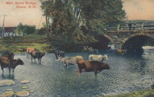 KEENE, New Hampshire, 1900-1910's; Main Street Bridge, Cows Crossing The River