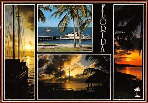 Florida Alligator -