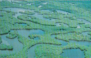 Florida Everglades National Park Mangrove Wilderness