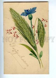 143913 GREETINGS Flowers spikelet HAND MADE postcard RARE old