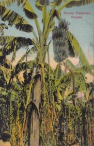 Panama Typical Banana Plantation