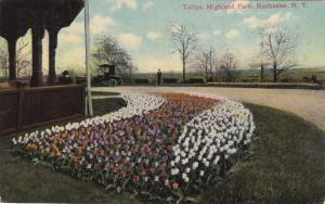 Tulip Flowers in Highland Park NY, Rochester, New York - pm 1911 - DB