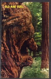 Old Man Burl,Calfornia Redwoods