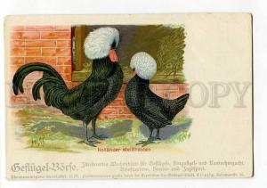 264598 HOLLANDER Hen Rooster by Herm.SCH. Vintage Poultry PC