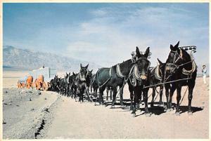 Twenty Mule Team -