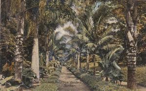 Palm Walk , Botanical Gardens , DURBAN , South Africa , 00-01s