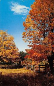 Drummond Island Michigan~Autumn Scene~Red Trees~Rustic Fence 1950s Postcard