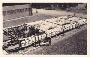 Idaho Farragut Naval Training Center Company Clothesline Real Photo RPPC