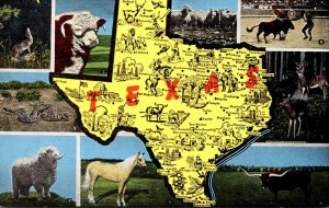 Texas Map With Multi Views