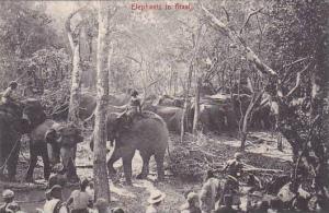 Ceylon Sri Lanka Elephants In Kraal