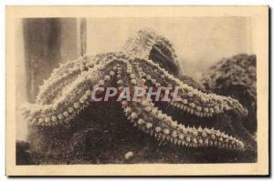 Old Postcard Oceanographic Station Salammbo Starfish