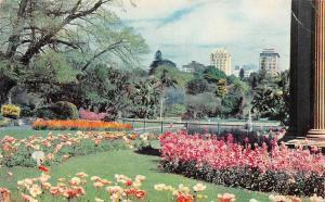 Australia Royal Botanic Gardens Sydney Flowers