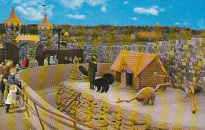 Bear Cubs Storyland Valley Zoo Edmonton Ontario Canada