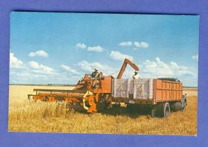Harvest Time Postcard, Loading Grain From Combines,Harvester