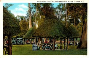 Florida Silver Springs Picnicking Under Palm Covered Huts Curteich